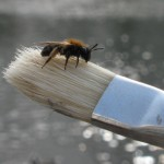 small bee on paint brush