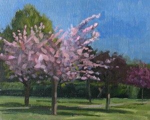 Spring Blossom, Flowering Cherry. Oil Painting by Roy Connelly