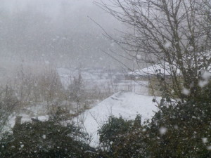 snow last year P1030504